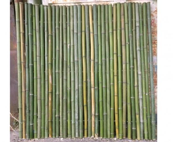 """Bambusrohr Matte grün """"Big Green"""" 200x200cm mit 4 bis 6cm Stangen B-Ware"""