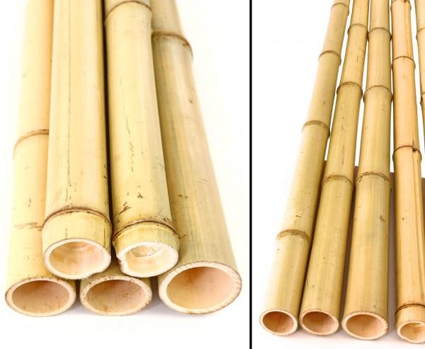 Bambusrohr gelb, Moso Bambus, gebleicht, Durch. 4,8- 6cm, Länge 150cm