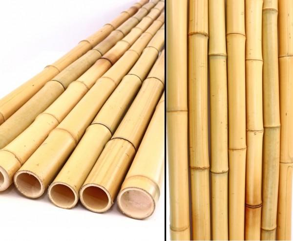 Bambusrohr gelb, Moso Bambus, gebleicht, Durch. 2,8- 3,5cm, Länge 300cm