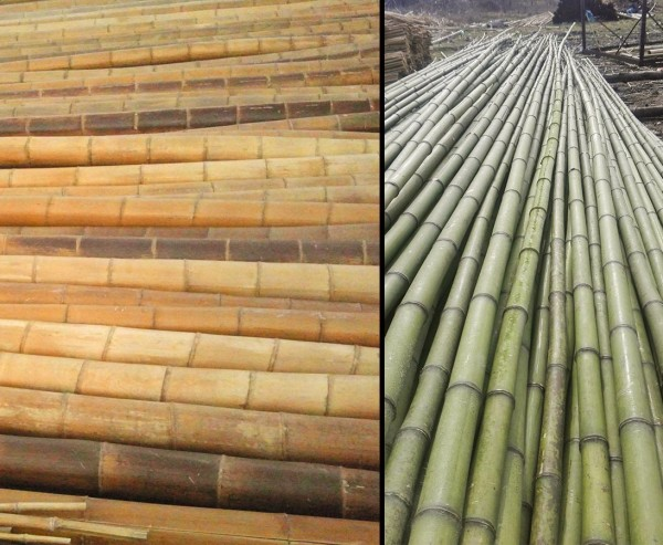 Bambusrohr Moso gelbbraun extra Lang 700cm mit 7 bis 10cm hitzebehandelt für Tipis