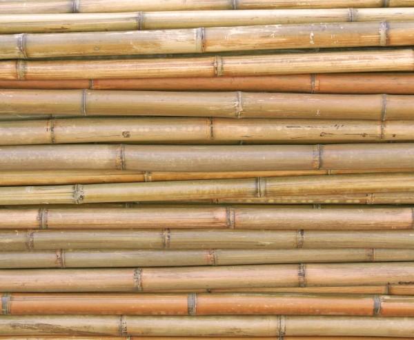 Bambusrohr 300cm mit 1,8 bis 3cm natur, gelb braun getrocknet