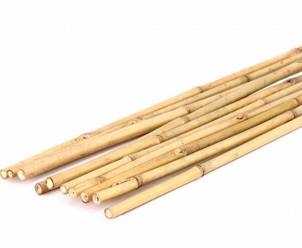 Bambusrohre Tonkin, gelblich, naturbelassen Länge 240cm