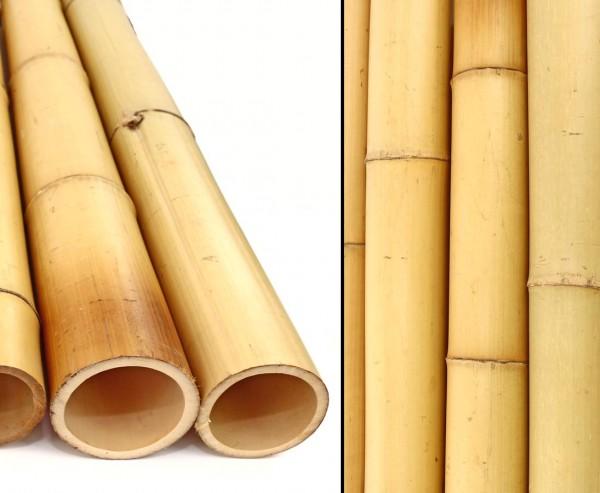 Bambusrohr gelb, Moso Bambus, gebleicht, Durch. 8,8- 10cm, Länge 200cm