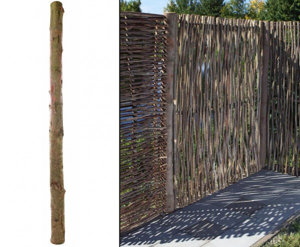 Erlen Pfosten für Haselnuss Zaun, Höhe 185cm
