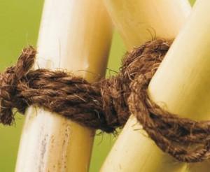 Jetzt bei bambus-discount.com: Badefässer und Bambus online kaufen