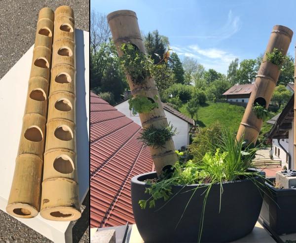 Bambus Ideen Rohr mit Lochbohrungen bepflanzen 100cm Durch. 8 bis 10cm