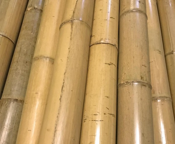 """Bambusrohr, """"Tokio"""", lackiert mit 3,5 bis 4,5cm, Länge 200cm"""