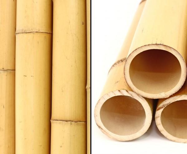 Moso Bambus Rohr mit 100cm gelblich Durch. 8,8 bis 10cm, gebleicht