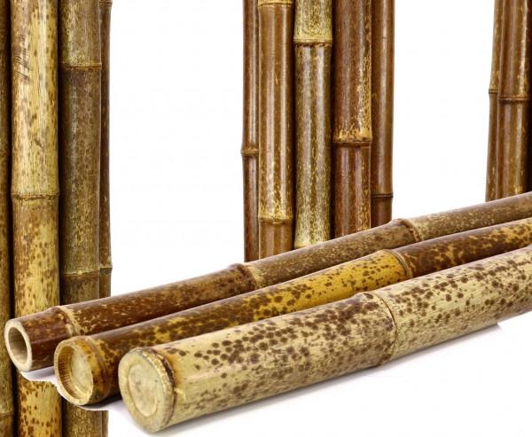 Tigerbambus Rohr, braun schwarz gefleckt, Durch. 4 bis 4,5cm, Länge 240cm