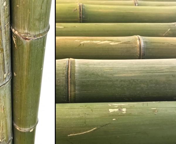 Bambusrohr Moso naturgrün, wird mit der Zeit braun gelb, Durch. ca. 9 bis 11cm, Länge ca. 180cm
