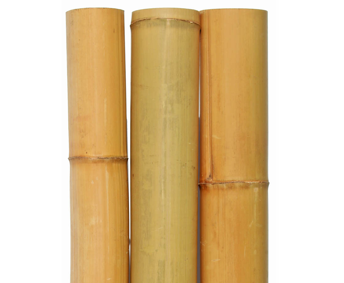 Länge 300cm Bambusrohr gelb 12-15cm Durch Moso Bambus gebleicht