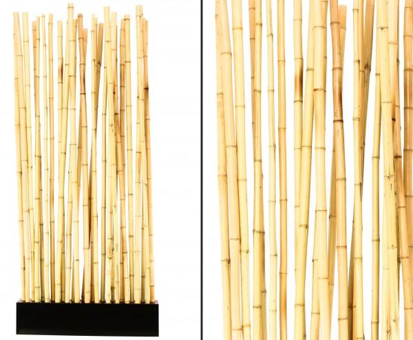 """Bambus Raumteiler """"Paris1"""" mit ca. 90x12x205cm, Sockel und 27 Rohre gelblich 2,8- 3,5cm"""