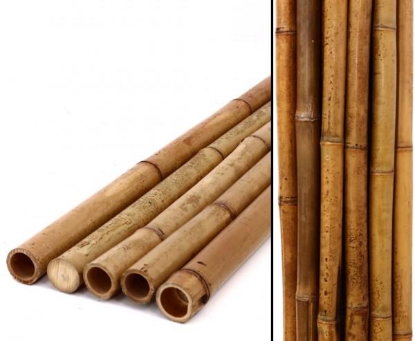 Karamellfarbenes Bambusrohr 200cm Durch. 2,8 bis 4cm, karbonisiert