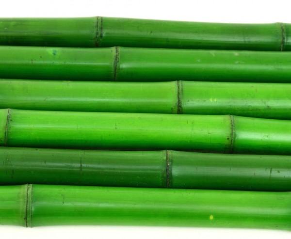 Bambusrohr grün mit Durch. 3,5 bis 5cm gefärbt, Länge 300cm