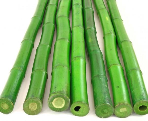 Bambusrohr grün 300cm, grünlich gefärbt, Durch. 3- 3,5cm