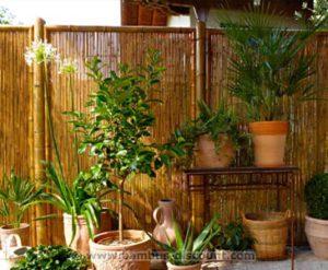 Bambus auf der Terrasse