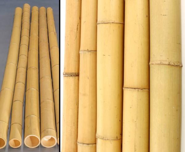 Bambusrohr gelb, Moso Bambus, gebleicht, Durch. 12- 15cm, Länge 300cm