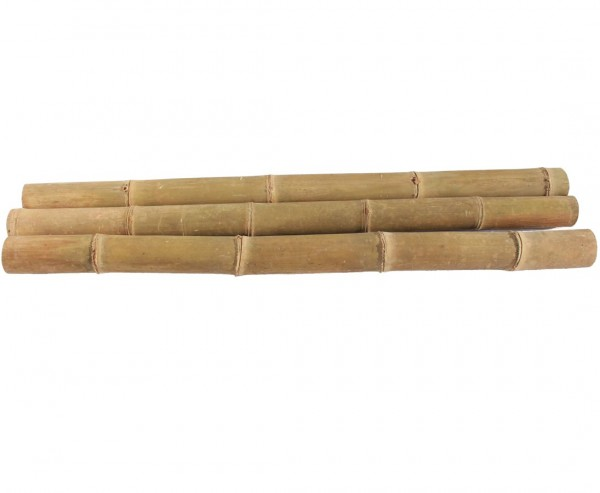 Riesen Bambusrohr Petung 200cm  gelb braun mit Durch. 13 bis 16cm, behandelt mit Borsalz