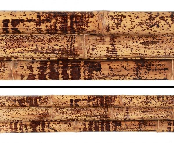 Tutul Tigerbambus, gelb schwarz gefleckt mit 285 bis 300cm, behandelt mit Borsalz, Durch. 7- 8cm