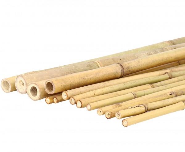 Tonkin Bambusstab 200cm natur Durch. 1,8 bis 2,0cm