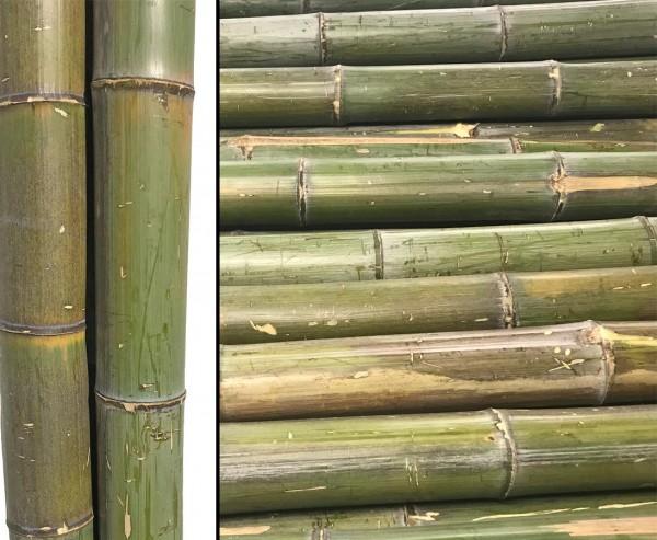 Bambusstange naturgrün bis braungelb, Durch. ca. 7 bis 8cm, Länge ca. 180cm