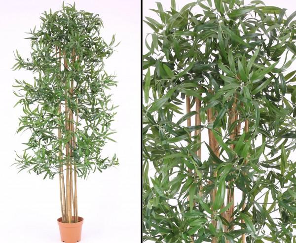 Bambusbaum, Multistamm mit Topf, 210cm