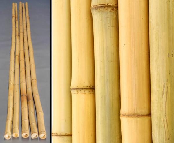 Bambusrohr gelb, Moso Bambus, gebleicht, Durch. 4,8- 6cm, Länge 600cm