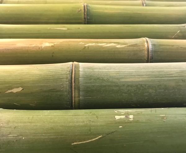 Sichtschutz aus Bambusrohr naturgrün, mit einem Durch. von ca. 8 bis 9cm, Länge ca. 180cm