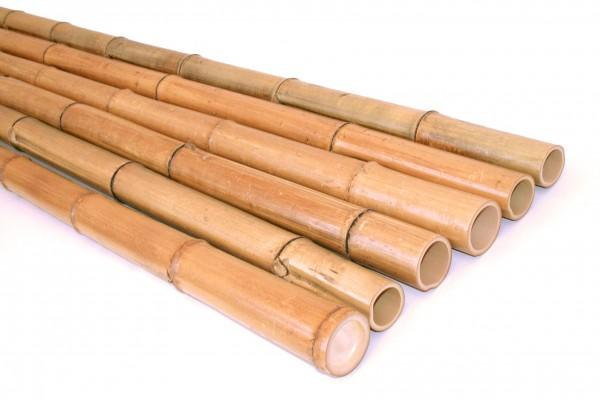 Bambusrohre Moso natur 100cm Durch. 6 bis 7cm, unbehandelt getrocknet gelbbräunlich
