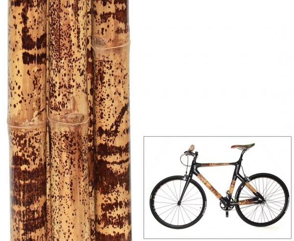 Leopardenbambus Tutul 200cm gelb schwarz gefleckt mit 4-5cm