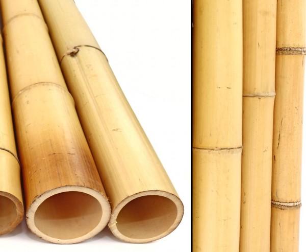 Moso Bambusrohr 100cm gelblich Durch. 7,8 bis 9cm, gebleicht